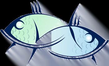 2 fish, drawn